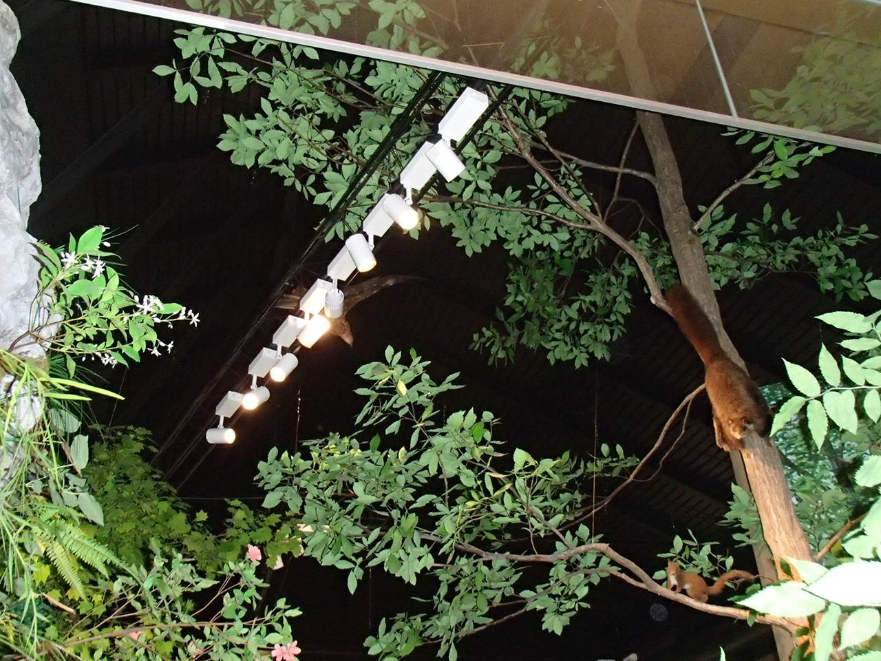 あけぼのパーク多賀太陽光発電設備等設置・LED照明器具更新工事 画像03